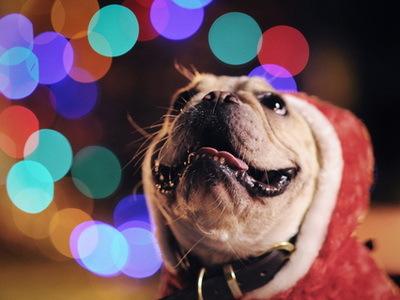 雪花隨風飄,攝影人的 聖誕節 小花招