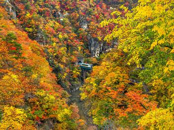 夜楓、高原、雨霧、光影 - 日本秋紅的攝影觀點