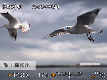 Canon EOS R5 ∕  R6 新增「動物優先」眼控檢測功能,之後打鳥、拍毛小孩們將更加精準、方便