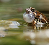 我們一起來拍 青蛙 吧!(上集)