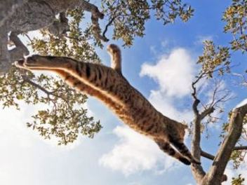 貓咪 ? 花豹 ?傻傻分不清楚! 間宮誠爾 的 超 活力 寵物 攝影