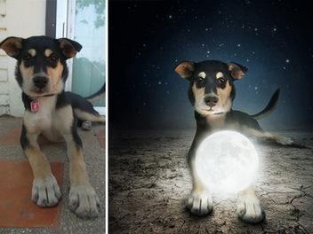 流浪狗 的超現實世界,正妹 攝影師 用 PS 幫牠們找到新家園