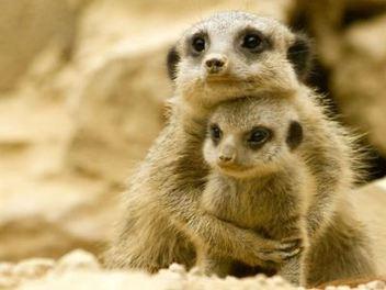 30張超可愛動物親子攝影 ,一起感受親情的溫馨時刻!