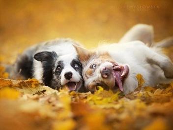 拍狗狗也能這麼唯美!Alicja Zmyslowka 的療癒系寵物攝影