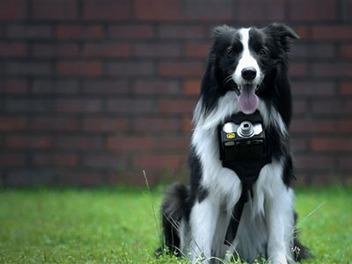 Nikon開發狗狗專屬相機,讓毛小孩也能捕捉生活精彩點滴!