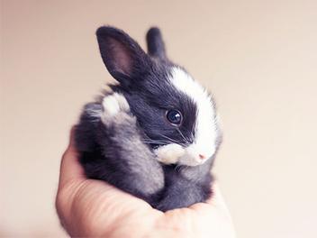 迷你幼兔的成長日記,萌萌治癒系寵物攝影