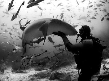 用鏡頭探索水下世界,5位你不可不認識的華人水底攝影師