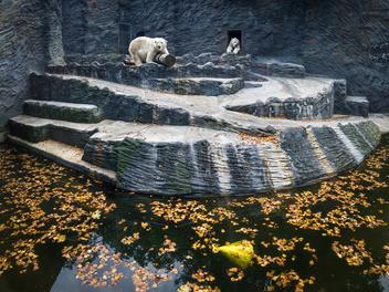 《白熊計劃》攝影師羅晟文專訪:「我不是在拍北極熊,而是你我忽略的動權問題」
