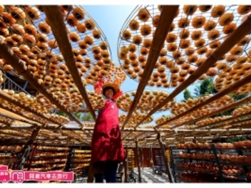 『開著汽車去旅行』新埔拍照打卡零失敗,最美的柿餅風景!