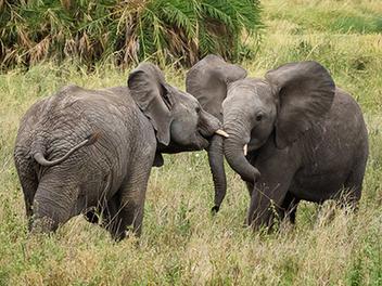 『攝影教學』來自專業攝影師的五項絕技,幫助你快速入門野生動物攝影