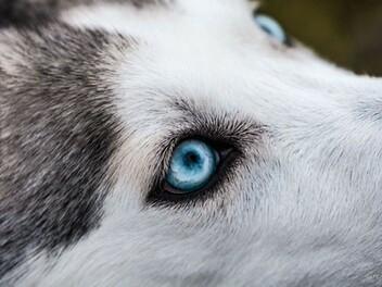 拍狗狗的10種創意
