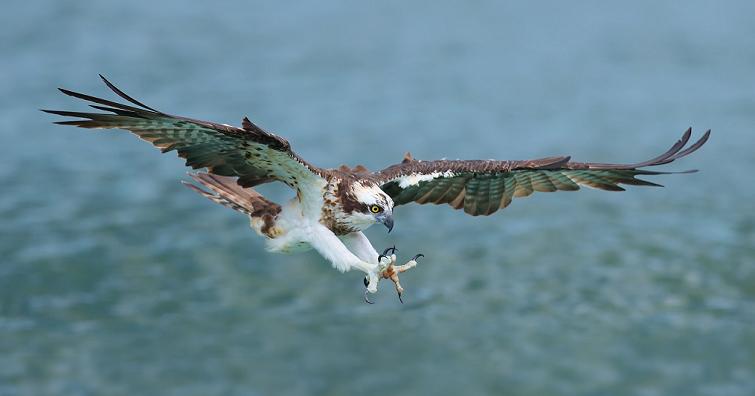 以相機捕捉鳥類的萬種表情 飛羽攝影師陳承光 Canon EOS 90D 使用心得